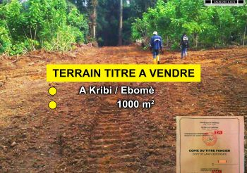 TERRAIN TITRE A VENDRE : Kribi / Ebomè